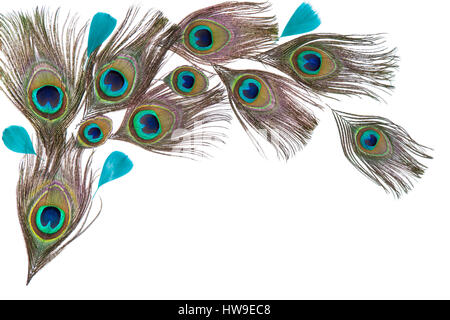 Green peacock feathers on the white background - Stock Photo