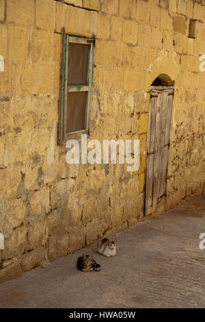 Two cats lying down in an alley in Fontana, Gozo, Malta - Stock Photo