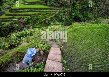 Philippines, Ifugao province, Banaue rice terraces around the village of Cambulo, listed as World Heritage by UNESCO, - Stock Photo