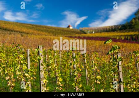 Germany, Baden-Wurttemburg, Black Forest, Gengenbach, vineyards and hilltop chapel, fall - Stock Photo
