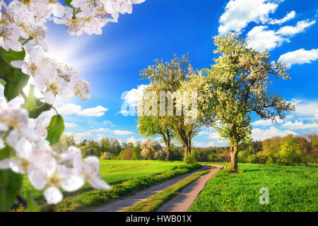 Idyllic rural landscape in spring: green meadow, blossoming trees, blue sky and rays of sunlight, framed with white - Stock Photo