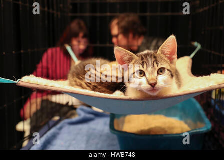 Beijing, USA. 11th Mar, 2017. An adoptable cat is seen during the Cat Camp in New York, the United States, on March - Stock Photo