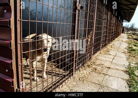 Adoption - Animal cruelty - Hope - Dog shelter - Stock Photo