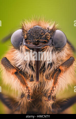 Extreme magnification - Honey Bee - Stock Photo