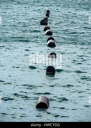 Oyster culture in Croatia, Austernzucht in Kroatien - Stock Photo