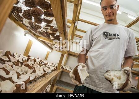 Seychelles, Mahe Island, Le Cap, craft village, Walter MONDON stores the flesh of Coco de mer nuts (Lodoicea maldivica) - Stock Photo