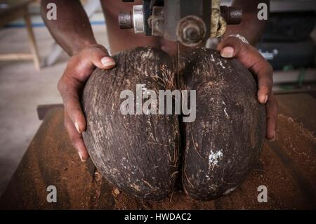 Seychelles, Mahe Island, Le Cap, craft village, Sarah RODDY saws in two pieces an endemic full Coco de mer nut (Lodoicea - Stock Photo