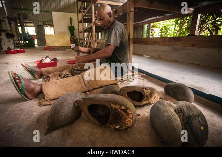 Seychelles, Mahe Island, Le Cap, craft village, Gilbert EDMOND extracts the flesh of a Coco de mer nut (Lodoicea - Stock Photo
