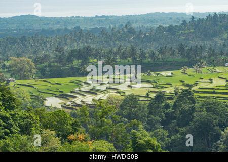 Rice Fields near Senaru, Lombok, Indonesia - Stock Photo
