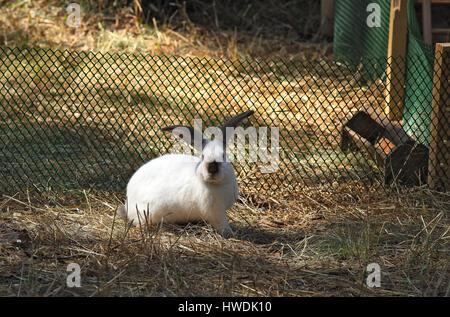 A funny white rabbit on the agrofarm - Stock Photo