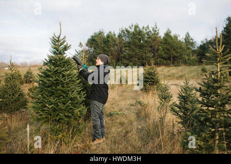 ... Man choosing tree in Christmas tree farm, Cobourg, Ontario, Canada -  Stock Photo