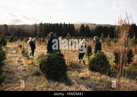 ... Parents and baby girls in Christmas tree farm, Cobourg, Ontario, Canada  - Stock