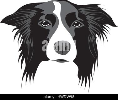 Abstract vector illustration of border collie head - Stock Photo