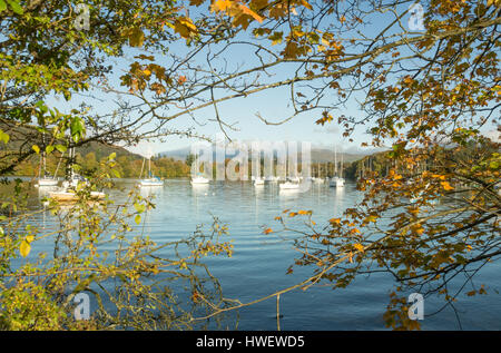 Sailing boats on Windermere lake from Ferry Nab, Bowness-on-Windermere - Stock Photo