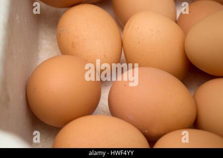 Dozens of eggs in a carton, Novi Sad, Serbia - Stock Photo