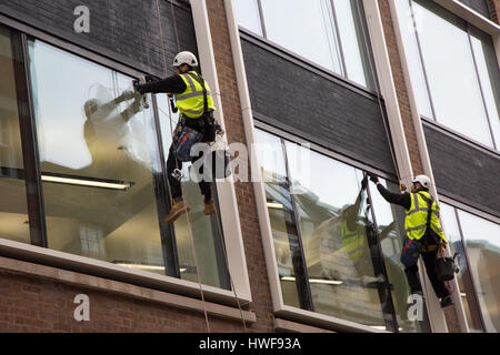 Two window cleaners working while abseiling down a new office block in London - Stock Photo