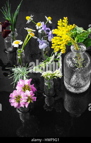 Herbs and blossoms in small glass bottles on dark background - Stock Photo