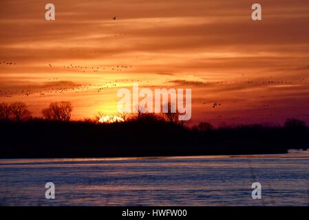 Wood River, Nebraska, USA,  20th March, 2017. Among the world's great animal migrations, the Sandhill Cranes awake - Stock Photo