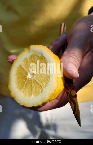 France, Alpes Maritimes, Menton, the domain of Citronneraie created by François Mazet, the Lemon of Menton is not - Stock Photo