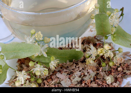 Lime, a cup of tea and dried blooms, Tilia tomentosa, summer lime-tree, a cup with tea and dry blossoms, Tilia tomentosa - Stock Photo