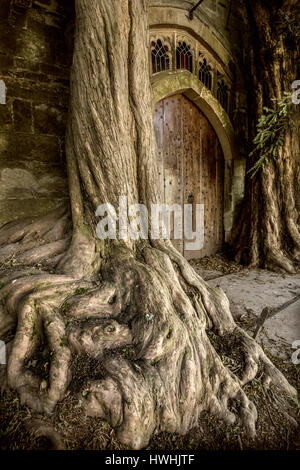 Yew trees flanking door in the north porch of St Edwards parish church in Stow on the Wold Gloucestershire  - inspiration - Stock Photo