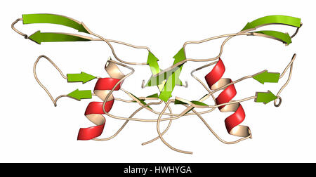 Bone morphogenetic protein 2 (BMP-2) protein. Plays important role in development of bone and cartilage. Cartoon - Stock Photo