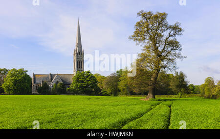 Wheat field and St Mary's Church on a fine spring morning in the small village of South Dalton, East Riding of Yorkshire, - Stock Photo