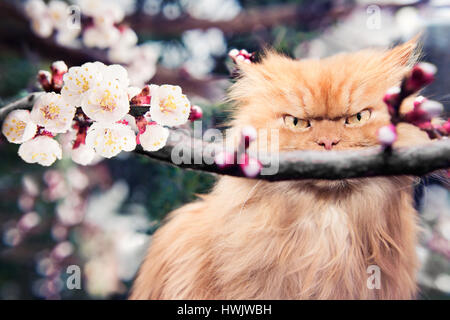 Persian cat with spring blooms - Stock Photo