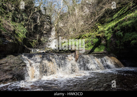 Mill Gill Force, an impressive waterfall in a limestone ravine, near Askrigg, Wensleydale, Yorkshire Dales National - Stock Photo