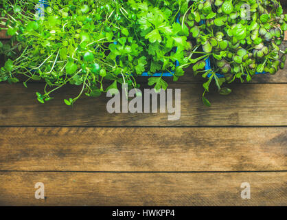 Homegrown radish kress, water kress and coriander sprouts in blue plastic pots on rustic wooden tray background, - Stock Photo