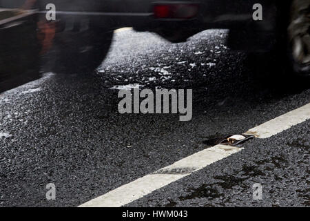 car with trailer driving past cats eye and white paint in the centre of a wet irish rural road in county sligo - Stock Photo