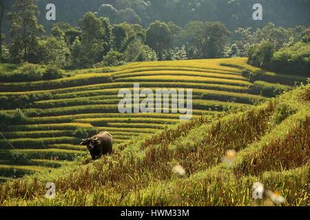 Sapa, North Vietnam - Stock Photo