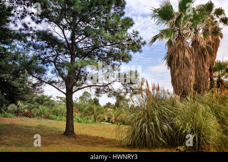 In the arboretum on the hillside, palm trees, pine trees and other subtropical plants on a clear Sunny day. The - Stock Photo