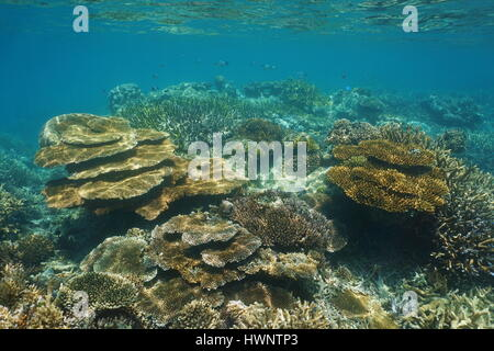 Coral reef of New Caledonia underwater in the lagoon of Grande-Terre island, south Pacific ocean, Oceania - Stock Photo