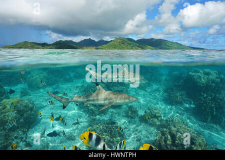 Over under sea surface sharks with tropical fish underwater and island of Huahine, Pacific ocean, French Polynesia - Stock Photo