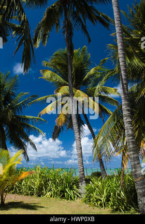 Beach Vacations: Patacho Beach, Alagoas, Brazil, considered one of the most beautiful beaches in Brazil- Beach with extensive coconut grove. Stock Photo