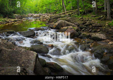 One of many cascades in the Otter Creek Wilderness, of West Virginia, the water providing a mirror for the surrounding - Stock Photo