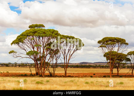 Outback, Nature Landscape in Western Australia, Australia - Stock Photo