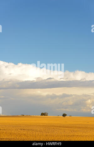 Harvested fields, Wheat belt, Western Australia, Australia - Stock Photo