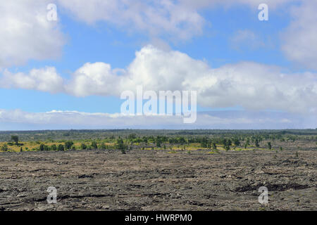 trees growing on an old lava flow field in Volcanoes National Park, Big Island of Hawaii - Stock Photo