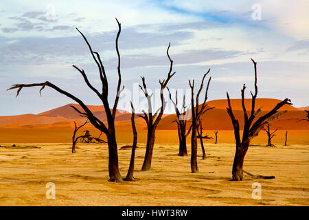 Namib desert in Sossusvlei region with dead Camel thorn trees Namibia March - Stock Photo