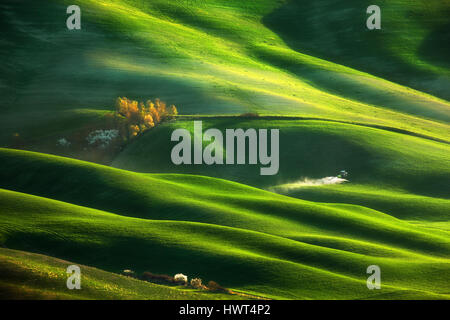 Italy,Tuscany.Province of Siena.Crete Senesi. Fields near Asciano - Stock Photo
