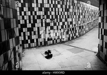 pigeon in subway urban black and white - Stock Photo