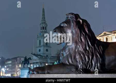illuminated statue of a lion looking the church of saint martin in the field, on trafalgar square - Stock Photo