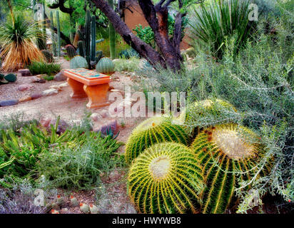 Cactus garden with bench in Tucson Botanical Gardens Tucson Arizona ...
