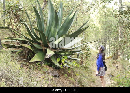 Admiring a large specimen of the Agave family in Oaxaca, Mexico - Stock Photo