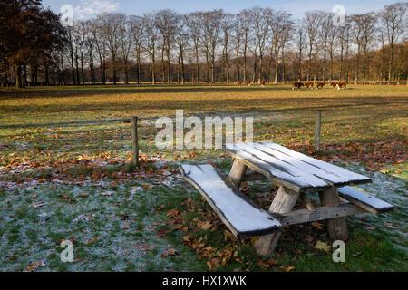 Riped picnic bench near Hernen castle in the Dutch province Gelderland
