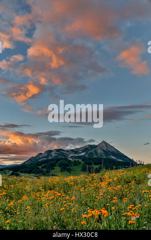 Wildflowers and Mt. Crested Butte (12,162 ft.), Gunnison National Forest, near Crested Butte, Colorado USA - Stock Photo