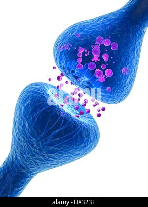 Synapse. Computer illustration of a synapse, the junction between two neurons. Synapses transmit electrical signals - Stock Photo