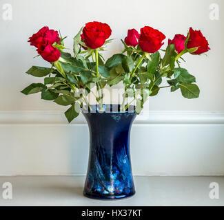 Simple arrangement of deep red roses in blue ceramic vase against plain neutral cream background - Stock Photo